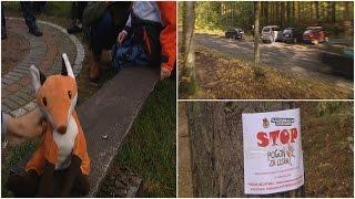TVP3 Gorzów: 25 ekip w samochodach pokonało 60 km aby dorwać rudą kitę