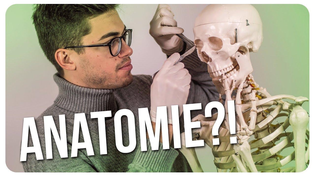 Medizinstudium - Anatomie - Meine Erfahrung mit Leichen?! - Doc Mo ...