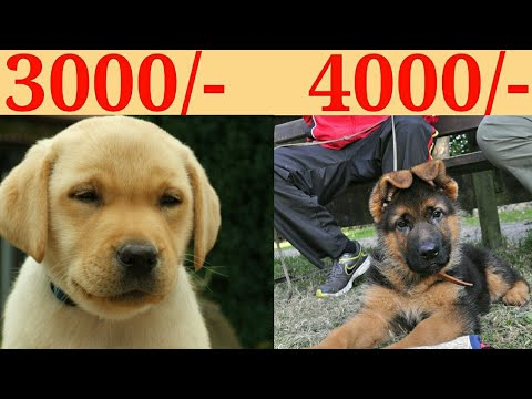 DOG PRICE IN INDIA 2019/DOG PRICE LIST IN INDIA/WITH PHONE NUMBER/KOLKATA PET CARE