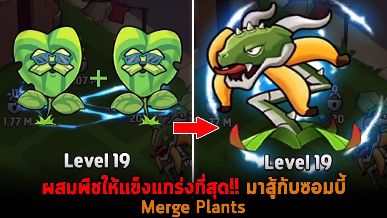 ผสมพืชให้แข็งแกร่งที่สุด มาสู้กับซอมบี้ Merge Plants