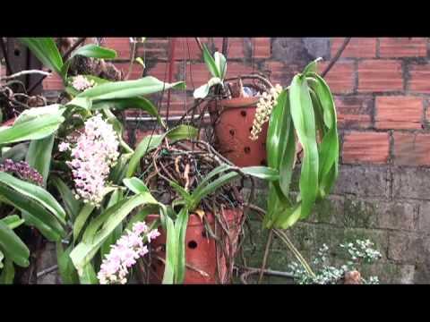 Hoa phong lan Phuong Cua Ong   Vũ Đình Ba