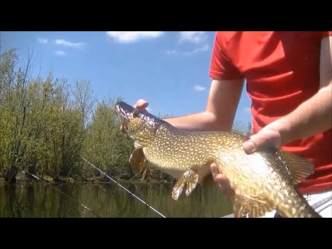 Mississippi River Pike Beatdown Non-Stop Action - May 2015