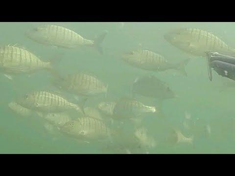 Podvodni ribolov 2018. (Konačno Proljeće 2) Pesca sub-primavera 2018