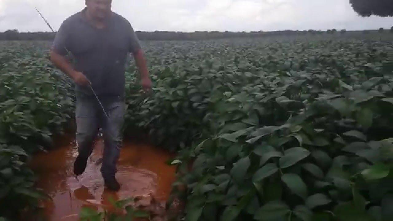 Plante soja - YouTube