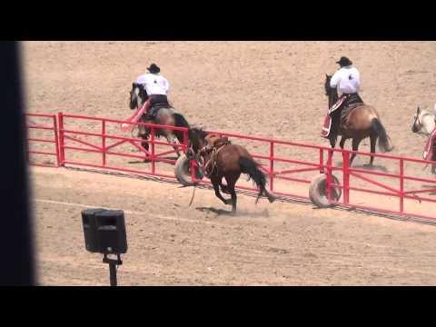2014 Cheyenne Frontier Days Rodeo Horse Injured