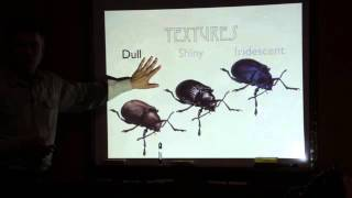 Drawing Insects with John Muir Laws