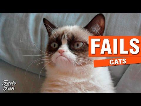 INTENTA NO REIRTE CON ESTE VIDEO 2   Cat Fails Compilation   Vine Compilation
