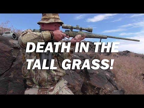 CASTLEFORD COYOTES: Idaho's Grassland Predators