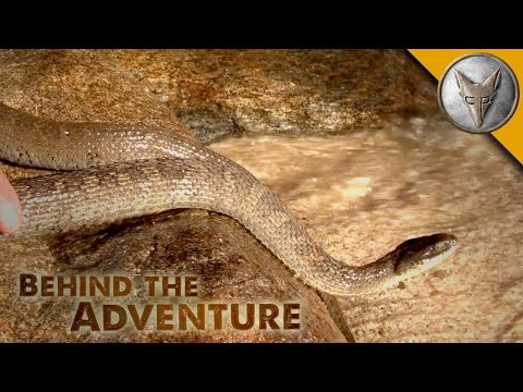 Lake Erie Water Snake - Behind the Adventure