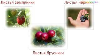 Лечение поджелудочной железы народными средствами. Панкреатит