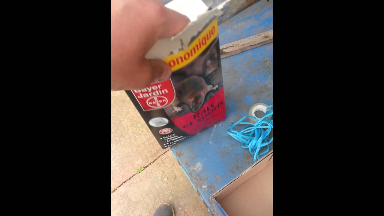 Comment se dbarrasser de rats dans une maison amazing tout savoir sur le loir sos rongeurs with - Comment tuer des rats ...