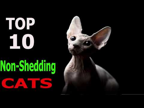 Top 10 Non - Shedding cat breeds | Top 10 animals