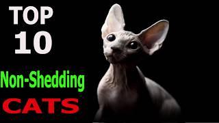 Top 10 Non  Shedding cat breeds | Top 10 animals