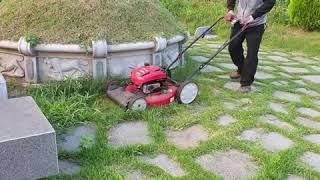 잔디까기와 예초기로 벌…