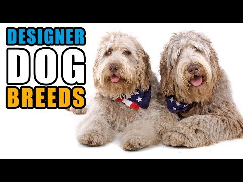 Popular Designer Dog Breeds | Talkin' Dogs List Show