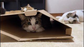 隠れてるつもりの猫とけっこう荒ぶる猫