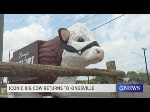 Iconic Cow Returns Home To Kingsville, Texas