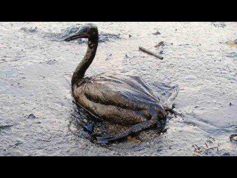 Has the Environmental Movement Failed? A Conversation with Dr. David Suzuki