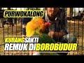 Lovebird Purwokalong Beli Di Klaten Kalahkan Kusumo Remuk Di Borobudur  Mp3 - Mp4 Download