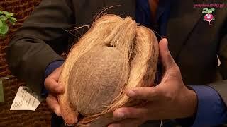 Что такое кокосовый субстрат #urozhainye gryadki 1