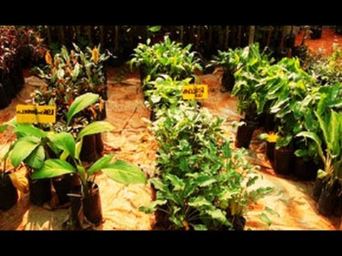 Flower nursery, Royal Garden in Wayanad