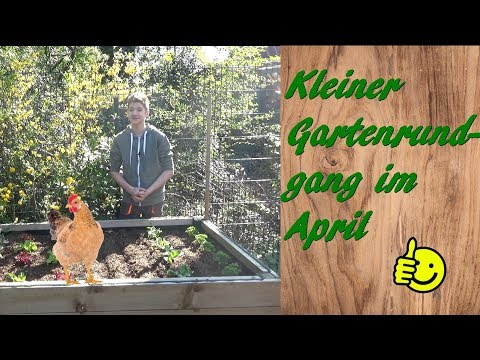Kleiner Gartenrundgang Im April 2019 - Mit Hühnern Und Vielem Mehr 😉🤗