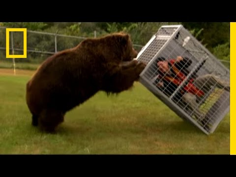 Brown Bear Attack | Dangerous Encounters: Alaska's Bear Coun