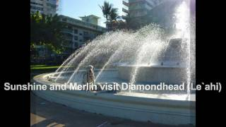 Sunshine And Merlin Visit Diamondhead (le`ahi) Training With Balanced Obedience
