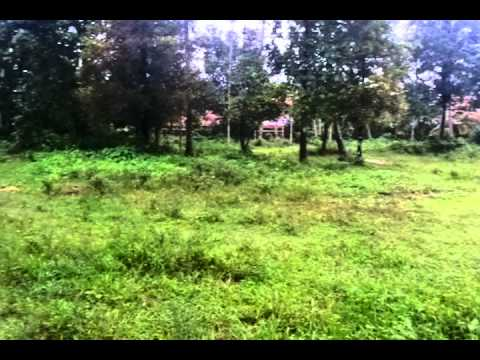 58 cent land for sale at Koodapuzha,Chalakudy