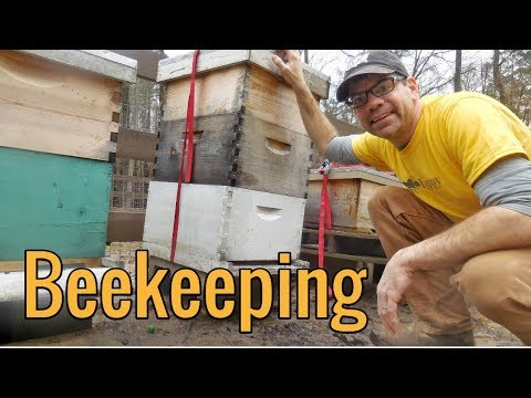 Raising Honey Bees on The Homestead