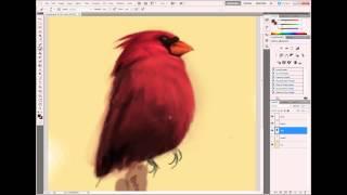 Cardinal Bird Digital Painting Time Lapse