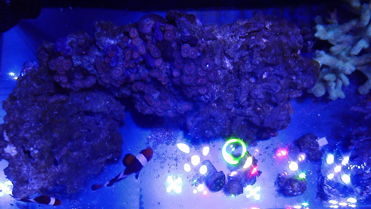How to install and set up a 24g all in one aio sc for How to start a saltwater fish tank
