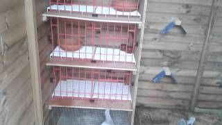 Making a biger space for my racing pigeons 2015