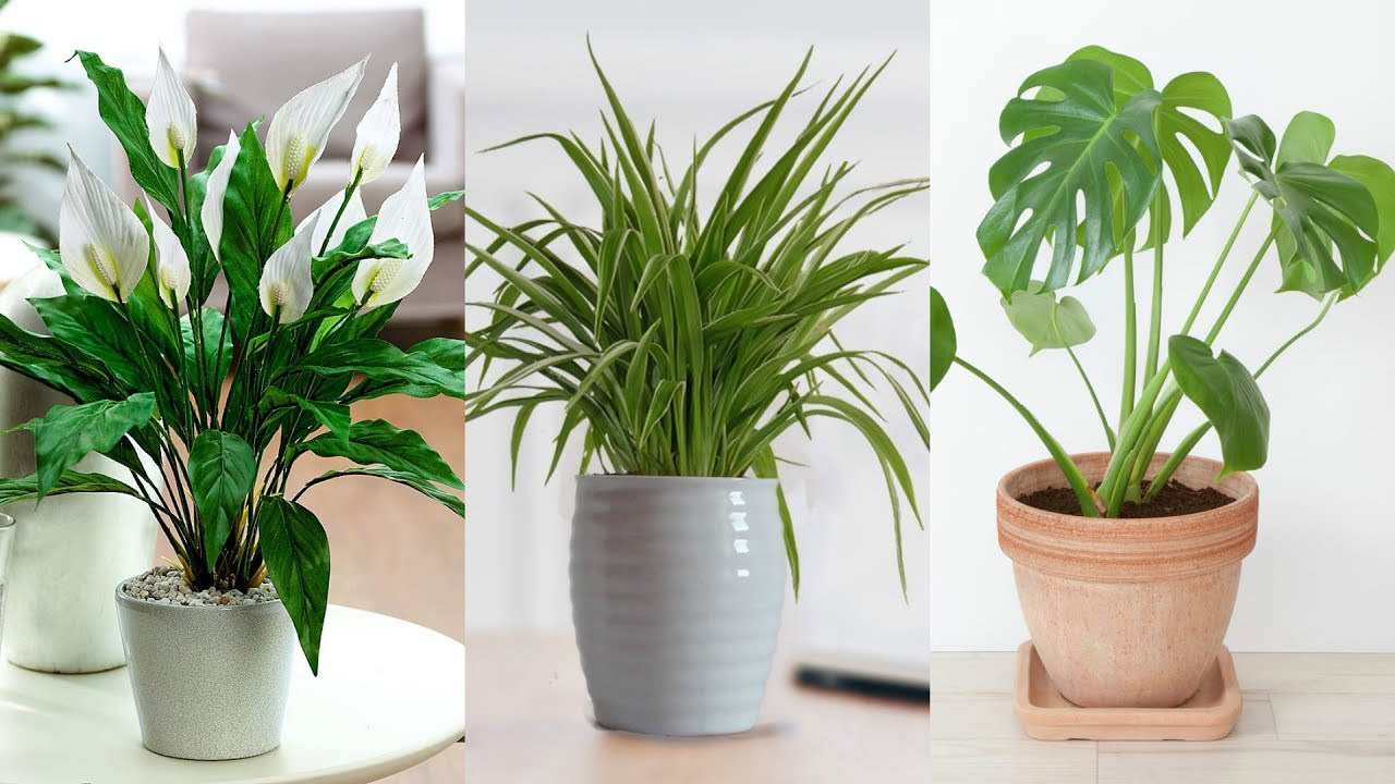 The 6 Best Office Plants To Boost Your Productivity