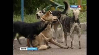 В Красноярске определили подрядчика на отлов бездомных собак