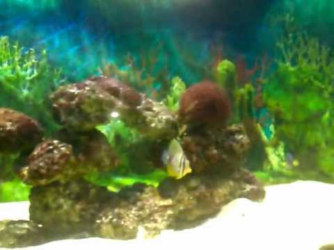 marine fish delhi .mp4