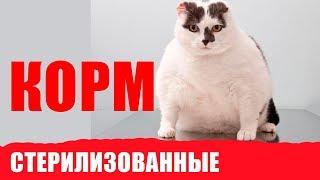 Особенности питания стерилизованных кошек. Советы ветеринара Royal Canin