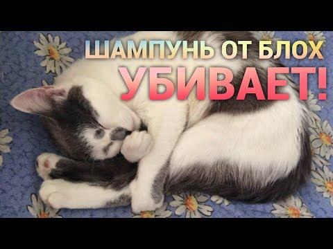 Шампунь от блох УБИВАЕТ!!!