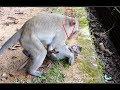 What big monkey doing on Charles monkey?