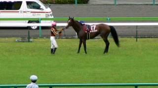ローゼンクロイツ号の最期(2008年金鯱賞)