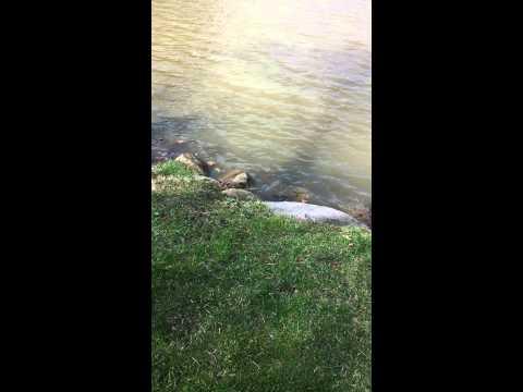 OMG kids fishing in Alliance Ohio Silver Park