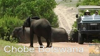 Self Drive Chobe Botswana