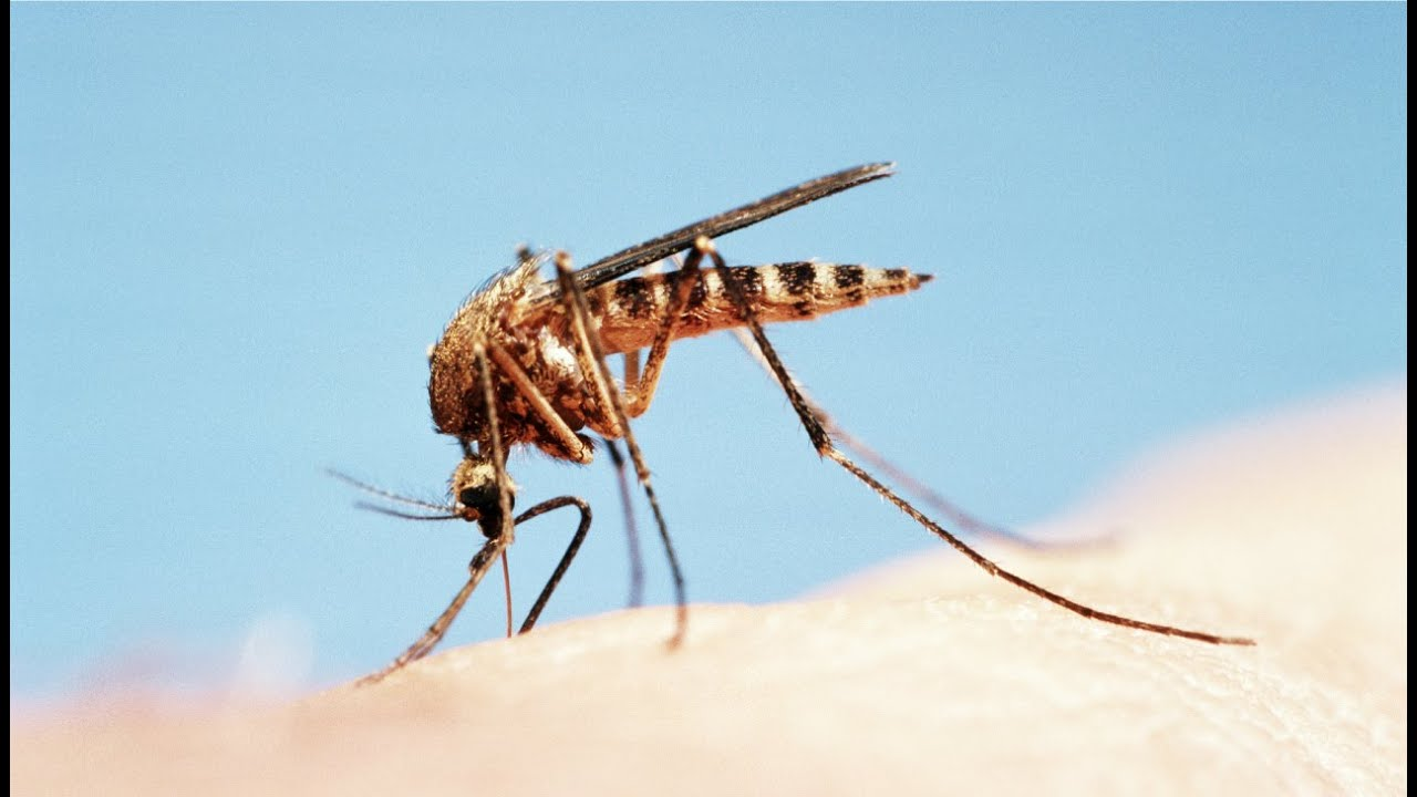 how to keep mosquitoes away from your home youtube