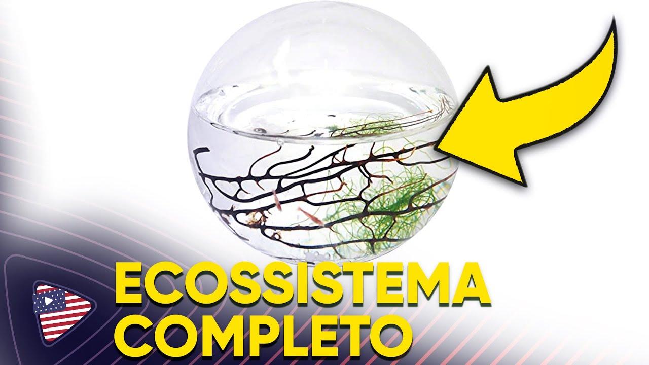 COMPREI UM ECOSSISTEMA COMPLETO - RESUMÃO