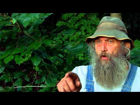 Bigfoot of Wirt County: The Ash Man