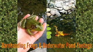 Frogging At Grandmas House