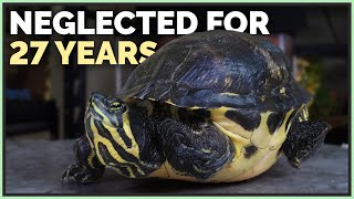 This Turtle Hasn't Had Lighting Since 1992 - 3 New Neglected Reptiles!
