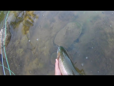 Fly Fishing For Big Rainbow Trout(63cm)|Kupa River-Summer 2019