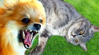 10х10 challenge КАК ДОСТАТЬ КОТА МАКСА - 2. Смешные моменты из жизни животных