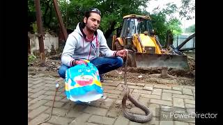 Big COBRA rescued by Deepak Sharma  9822021291 Pune